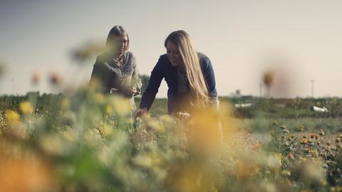motherlove-farm1