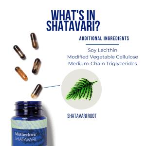 Shatavari capsule 4